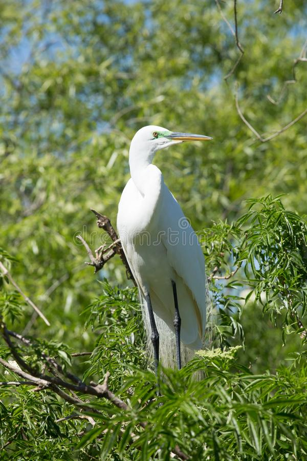 White bird in a tree near the water royalty free stock photos