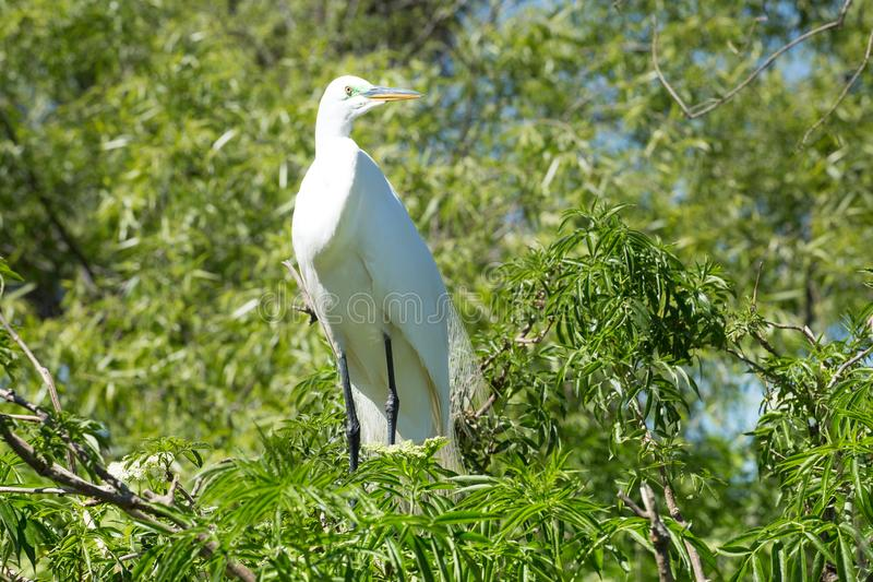 White bird in a tree near the water stock photo