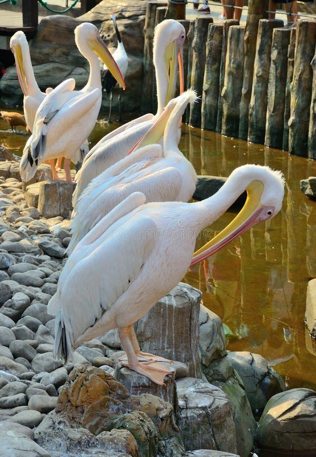 White Birds stock photos