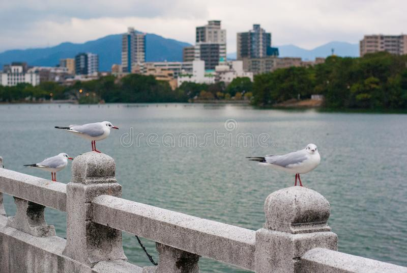 White birds standing on the stone bridge with has lake and building. In the background stock images