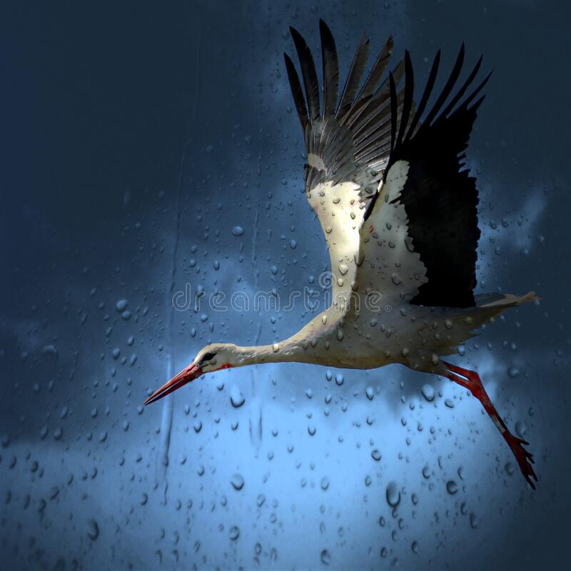 White and Black Bird Flying Under Dark Rainy Sky royalty free stock images