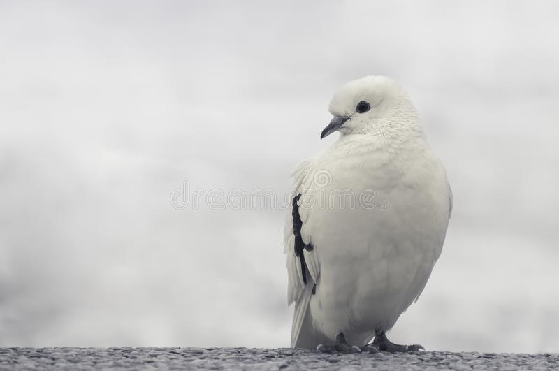 White and Black Bird on Trunk royalty free stock photography