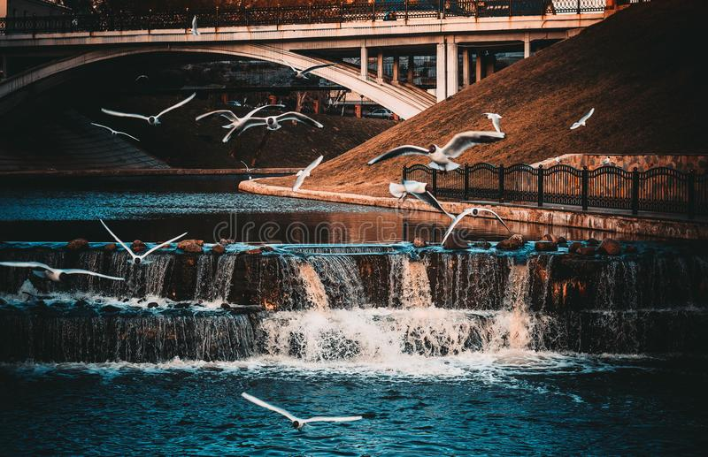 White-and-black Birds Flying Near Waterfall royalty free stock images