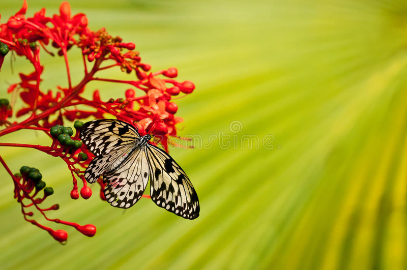 White-black butterfly on red flower with green background stock photo