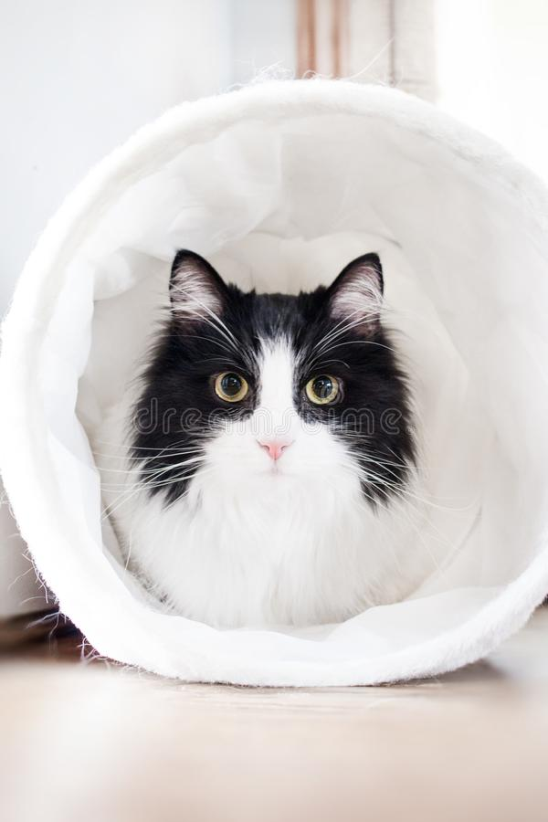 White and Black Cat Inside White Textile stock images