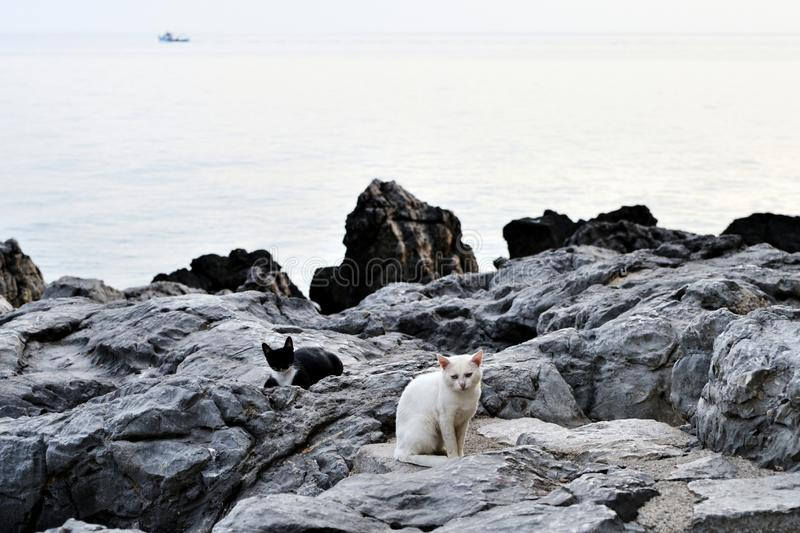 White and black cats are sitting on the rocks. On the coast royalty free stock photography