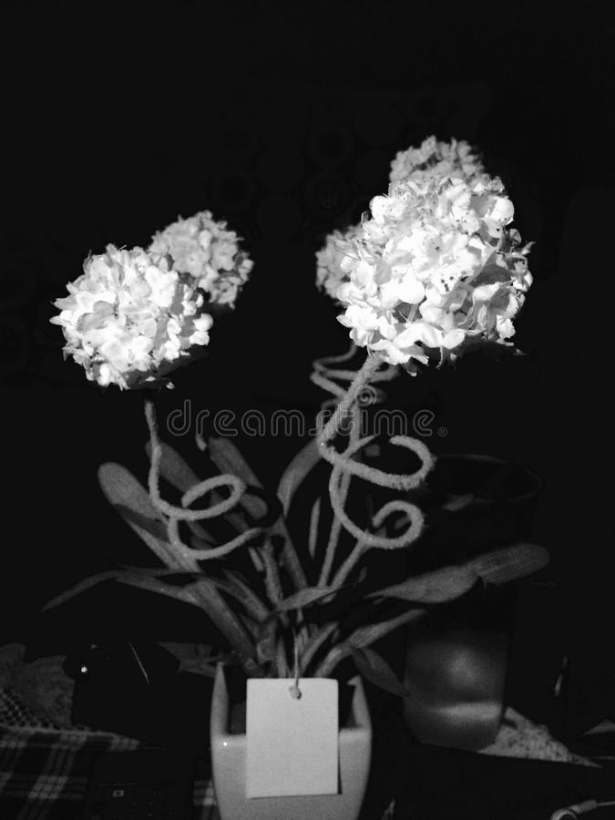 White and Black royalty free stock photography