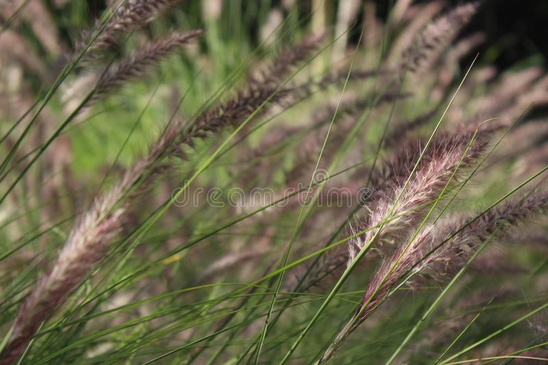 White and Black Grasses in Close-up Photography stock photos