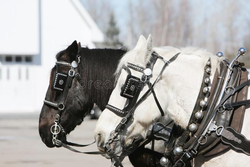 White And Black Horse Free Public Domain Cc0 Image
