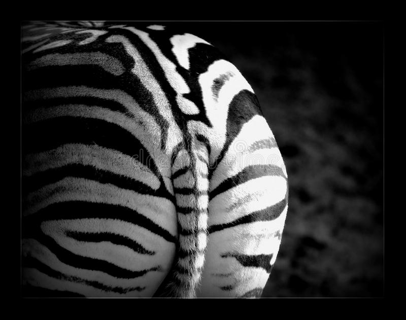 White, Black, Black And White, Mammal stock image