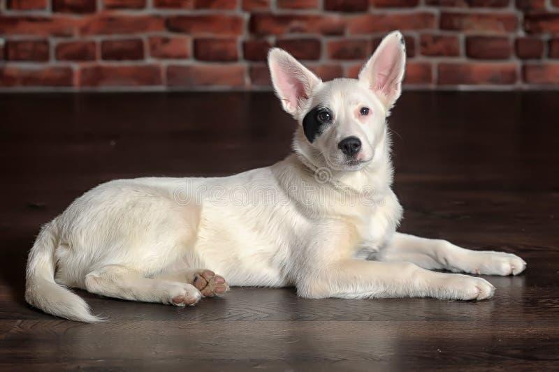 White black spots puppy stock photos