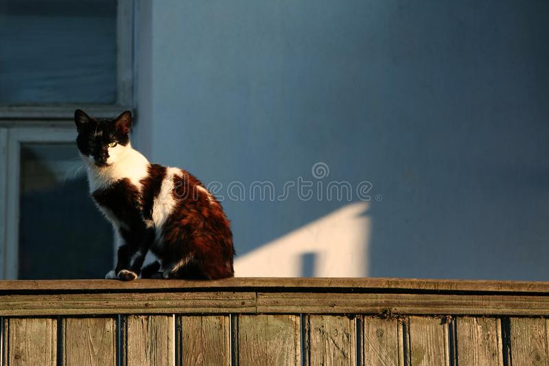 White-black strict alley cat with yellow eyes sitting on the fence and looking straight. Against the background of a village house. Cat lit by the warm light royalty free stock photos
