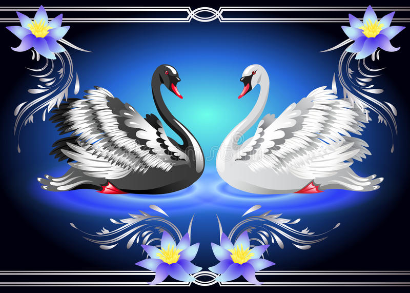 White and black swan and lilies