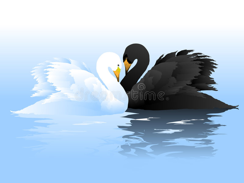 White and Black swans couple. White and black swans swim freely in the crystal clear water. He loves a White very much. She loves Black too. Be happy vector illustration