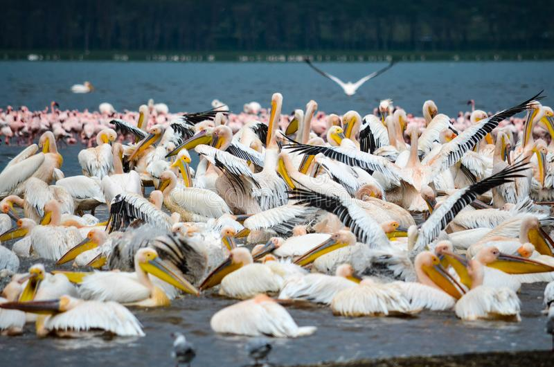 White, Black, and Yellow Birds royalty free stock image