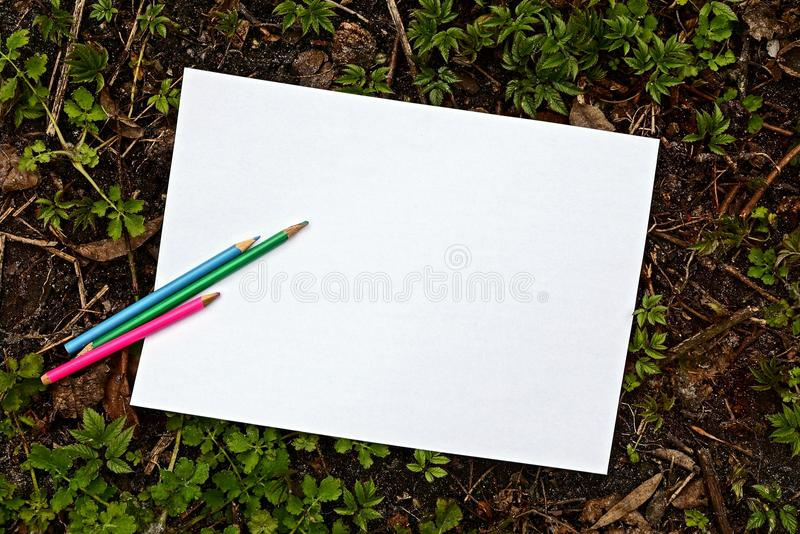 White blank paper leaf and colored pencils on the ground amongst green plants royalty free stock photography