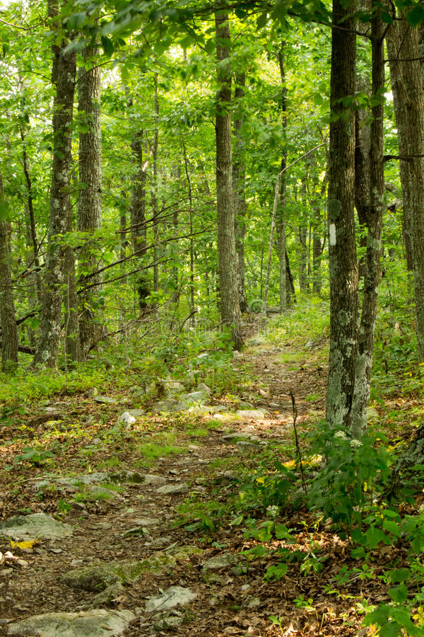 White Blaze on the Appalachian Trail. On the Blue Ridge Parkway in the Summer stock photos