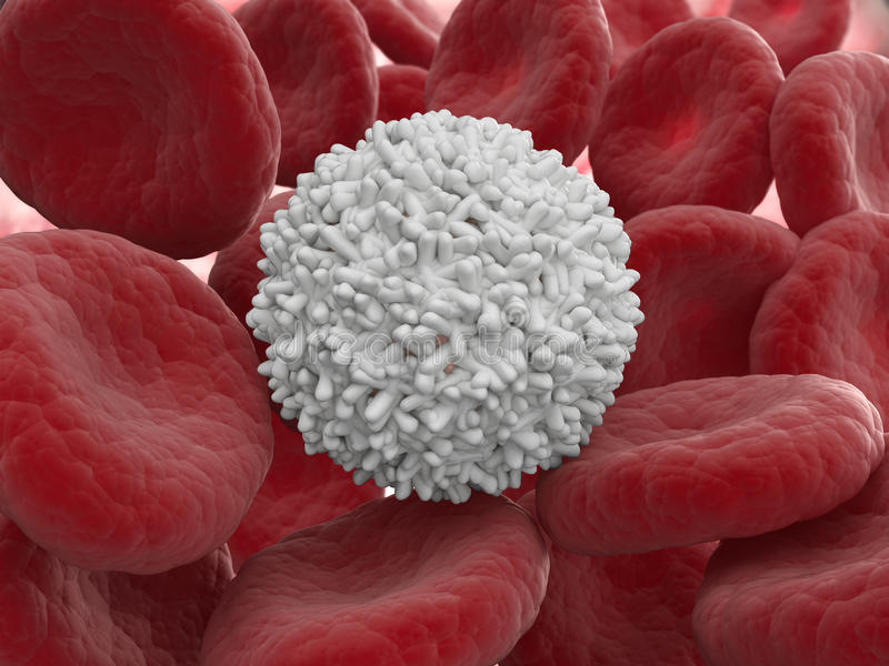 White blood cell stock illustration