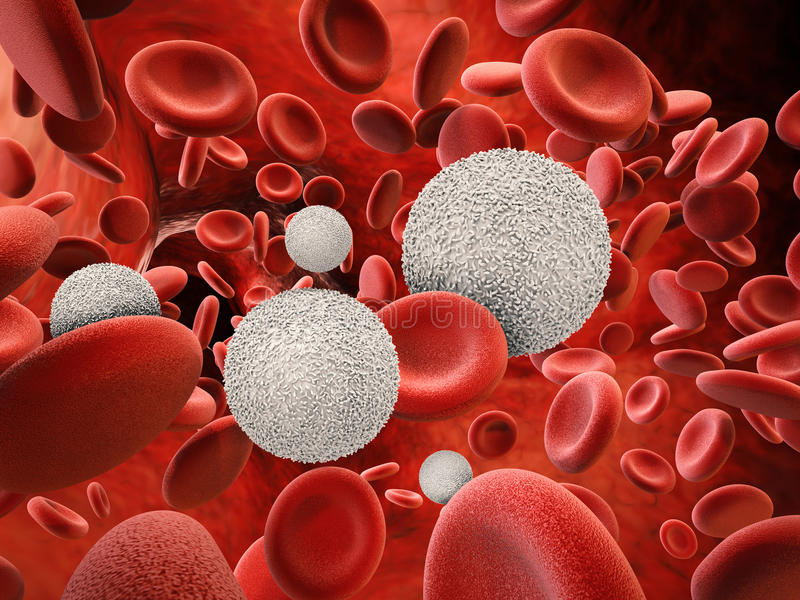 White blood cells with red blood cells vector illustration