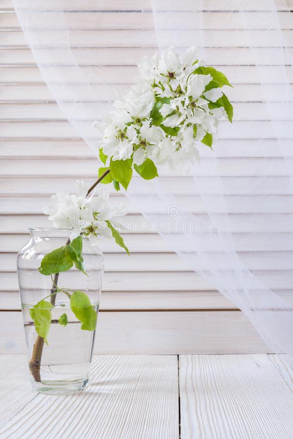 White blooming Apple tree branch in glass vase on light background of blinds and transparent curtains. stock photo