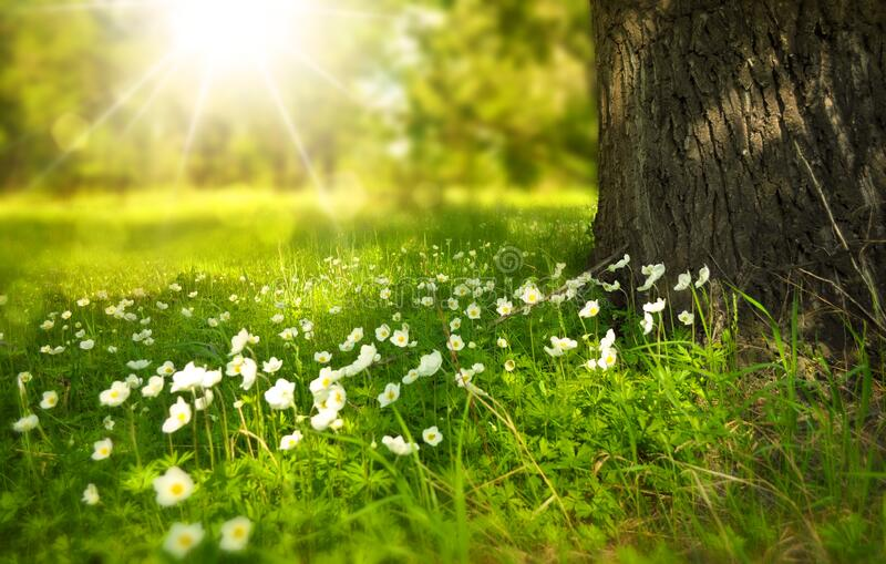 White Blooming Flower Under The Tree During Daytime Free Public Domain Cc0 Image