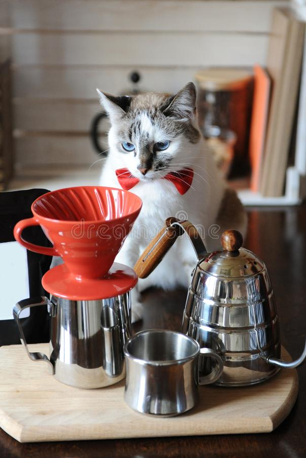 White blue-eyed cat barista in red bow tie. Alternative coffee brewing. Pack with empty label, space for design or text stock photography