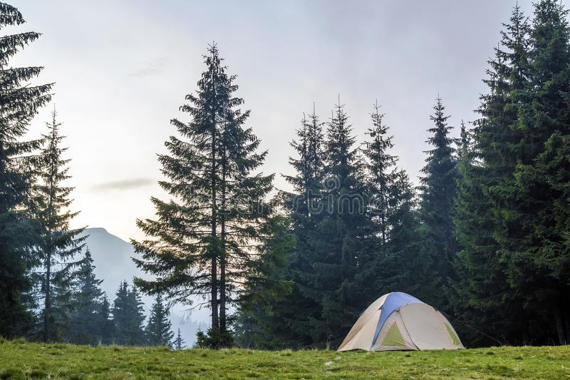 White and blue tourist tent on green meadow between evergreen fir-trees forest with beautiful mountain in distance. Tourism, outdo royalty free stock image