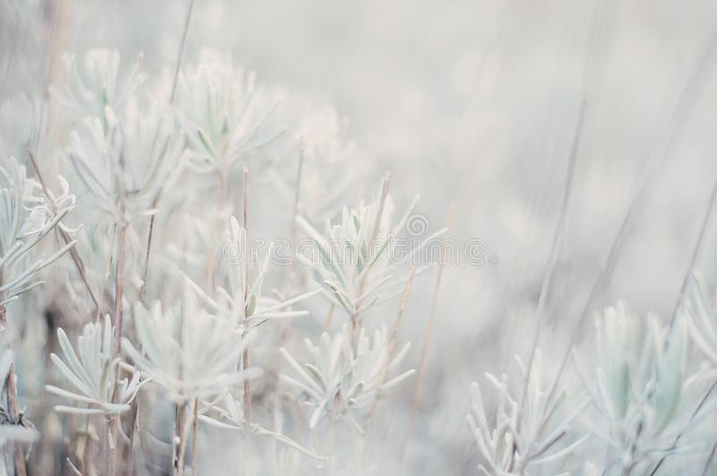 White Bokeh Natural Vegetation stock photography