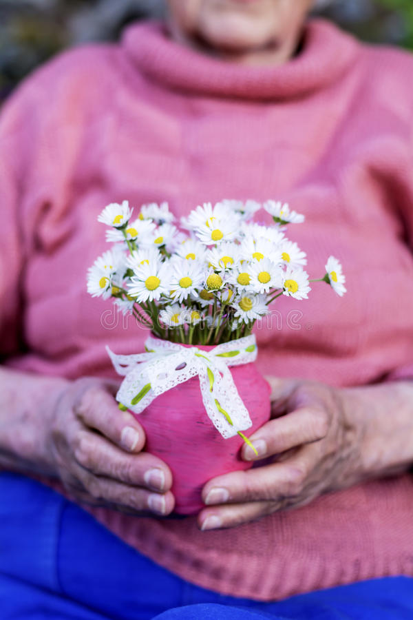 White bouquet of blooming daisies in senior woman's hands royalty free stock photo