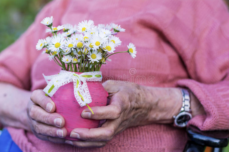 White bouquet of blooming daisies in senior woman's hands royalty free stock photography