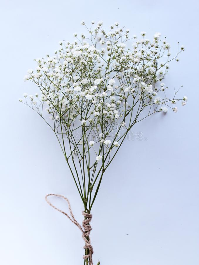 White bouquet flowers vintage spring background stock photography