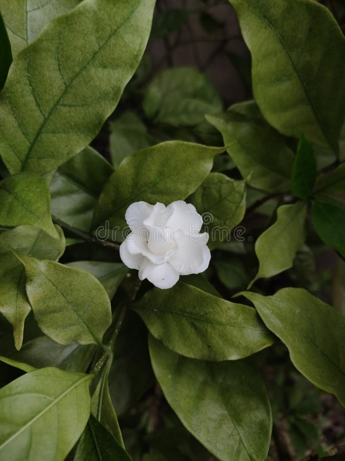 White bouquet flower on the green tree. In the summer day stock photography