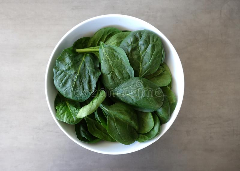 White Bowl of Fresh Baby Spinach Leaves against a Gray Background. A white round bowl of fresh baby spinach leaves shot from above against a gray background stock photography