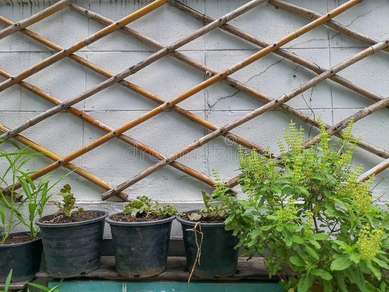 White brick wall decorated with brown bamboo trunk and green vegetable in black pot on the wall. In background royalty free stock photo