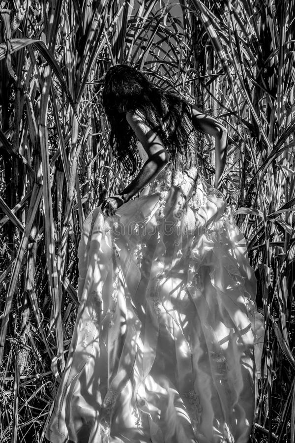 White bridal dress with beautiful romantic young woman in sugar cane field. Bride with long black hair standing alone in nature background, romantic scene royalty free stock image