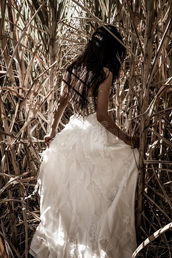 White bridal dress with beautiful romantic young woman in sugar cane field. Bride with long black hair standing alone in nature background, romantic scene royalty free stock photos