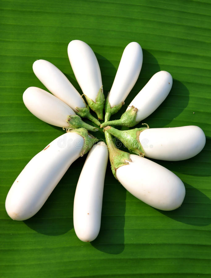 Download White brinjals stock photo. Image of flavour, plant, plucked - 20956410