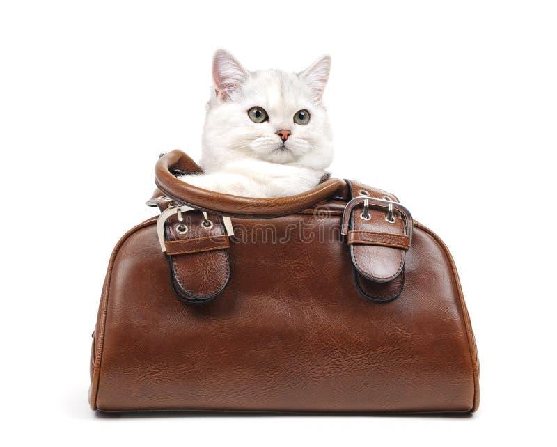 White British Cat In A Handbag Stock Images