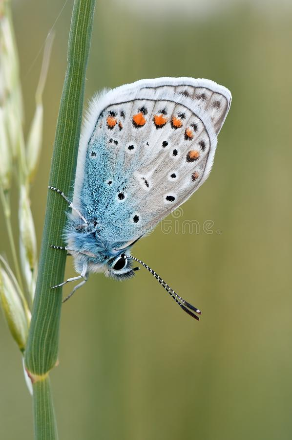 White Brown Black and Blue Butterfly Standing in Green Plant stock image