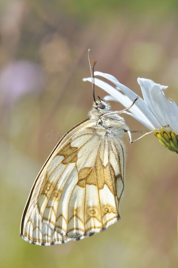 White And Brown Butterfly On White Flower Free Public Domain Cc0 Image