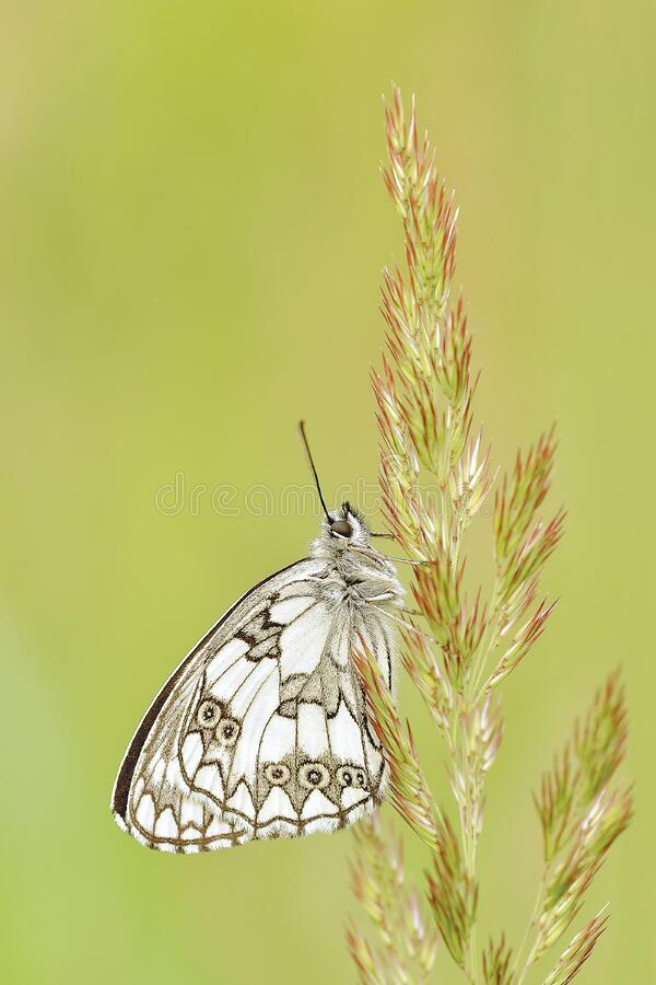 White And Brown Butterfly On Green And Pink Leaf Plant Free Public Domain Cc0 Image