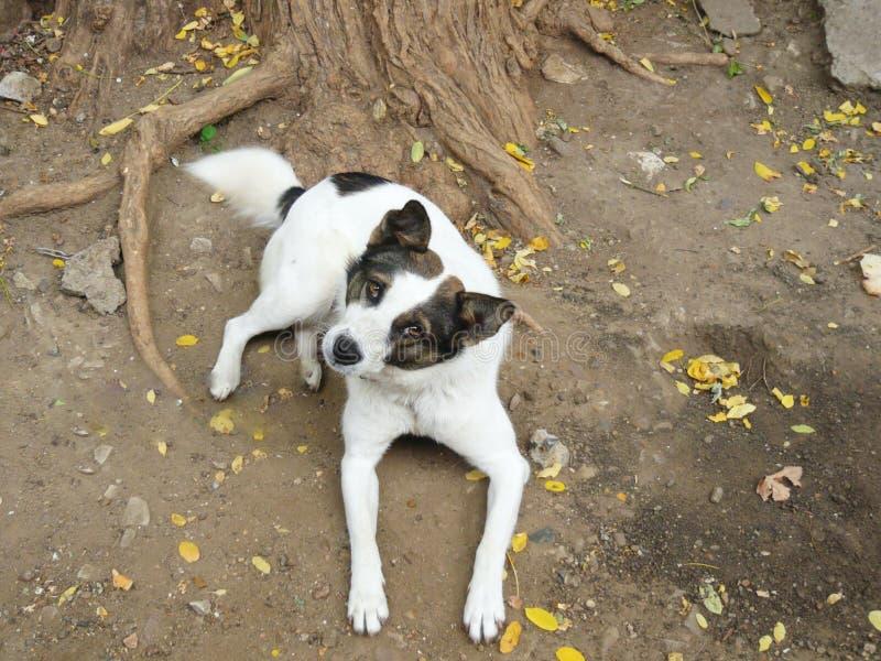 White brown dog royalty free stock photo
