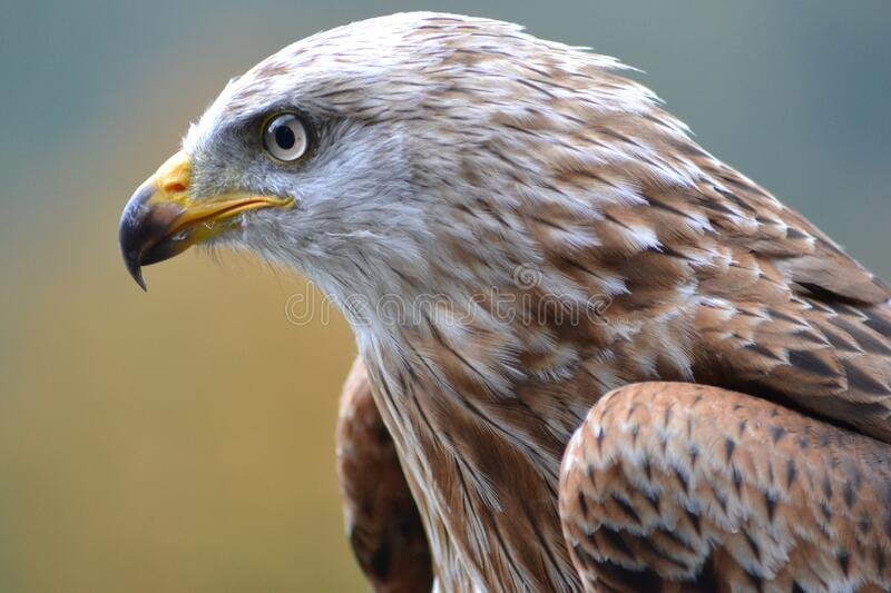 White And Brown Eagle Free Public Domain Cc0 Image