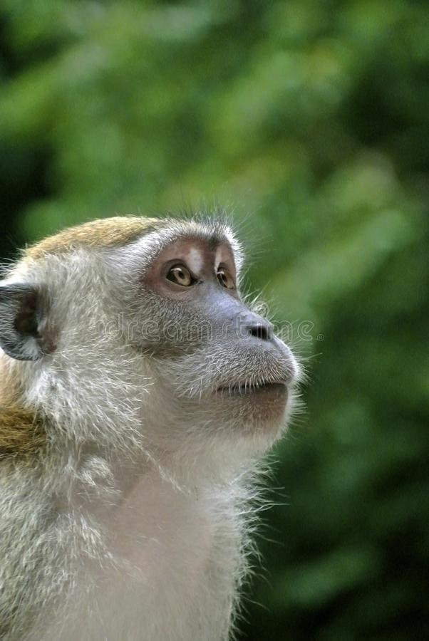 White Brown Monkey Macroshot Photography Free Public Domain Cc0 Image