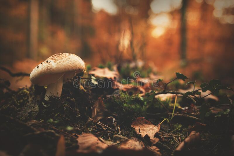 White and Brown Mushroom Beside Green Leaf Plant royalty free stock photo