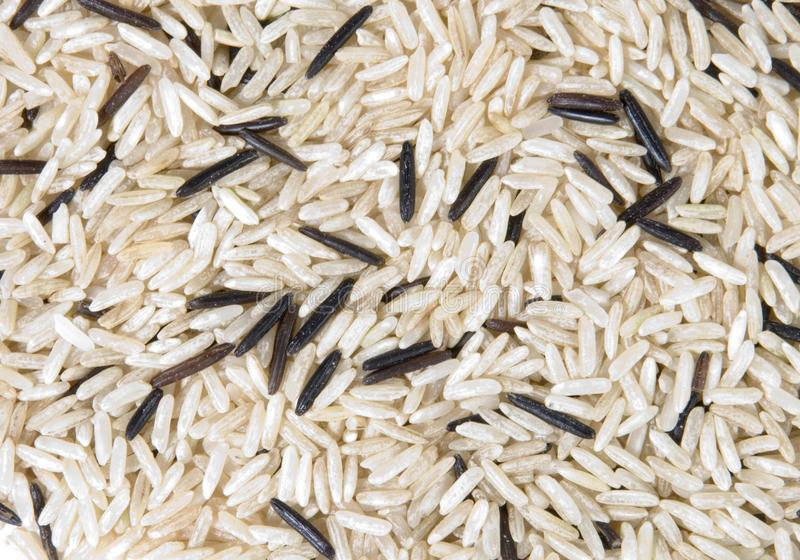 White and brown rice stock photography