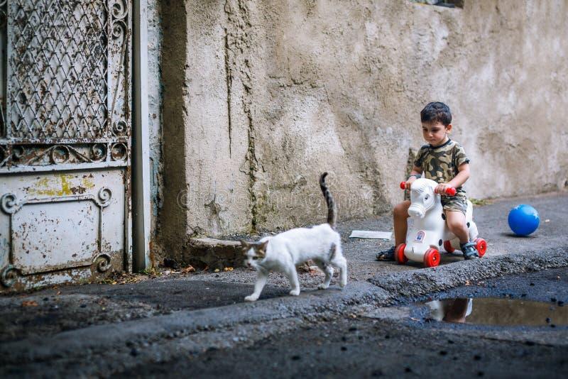 White Brown Short Fur Cat Walking Near Boy in Brown Black Short Sleeve Shirt Riding White Red Toy stock photos