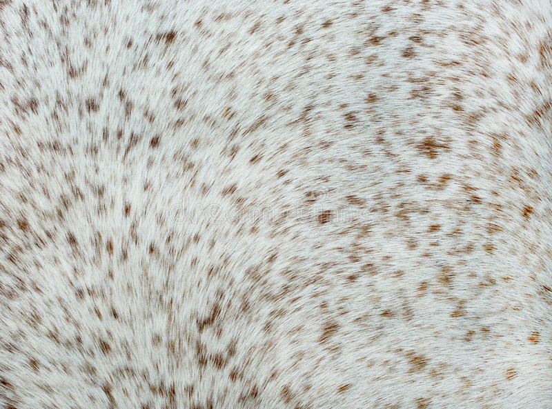 White and brown spots for background. White and brown spots, detail of horse's skin for background stock images