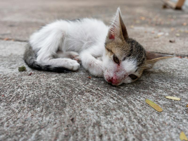 White and brown stray kitten or cat with open eyes and scar on nose over cement background stock photography