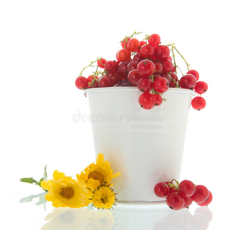 White bucket red currents. With yellow flowers stock photos